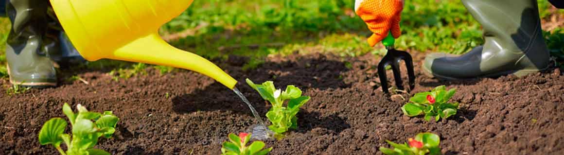 Föreläsare miljö, hållbar utveckling